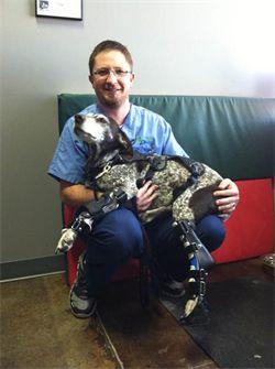 Martin Kaufmann of Ortho Pets
