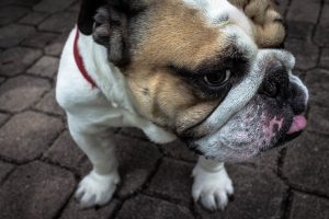 Pet Sitting and Dog Walking in Fort Collins and Loveland, Colorado