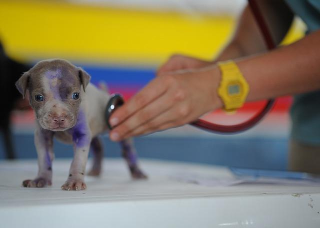 Pet Sitting and Canine Parvo Virus