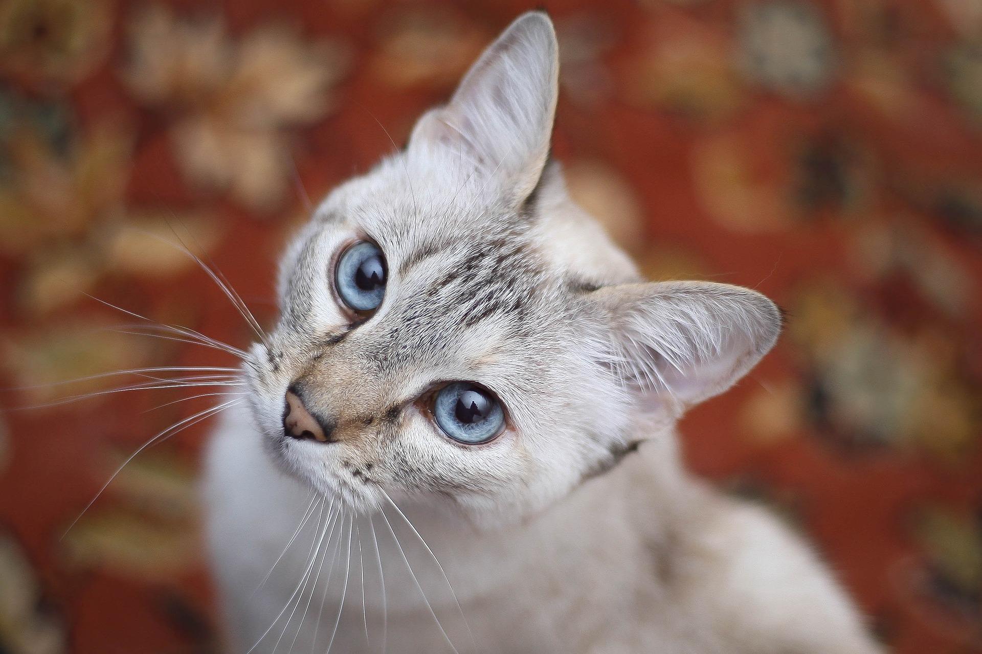 Pet Sitting Cat