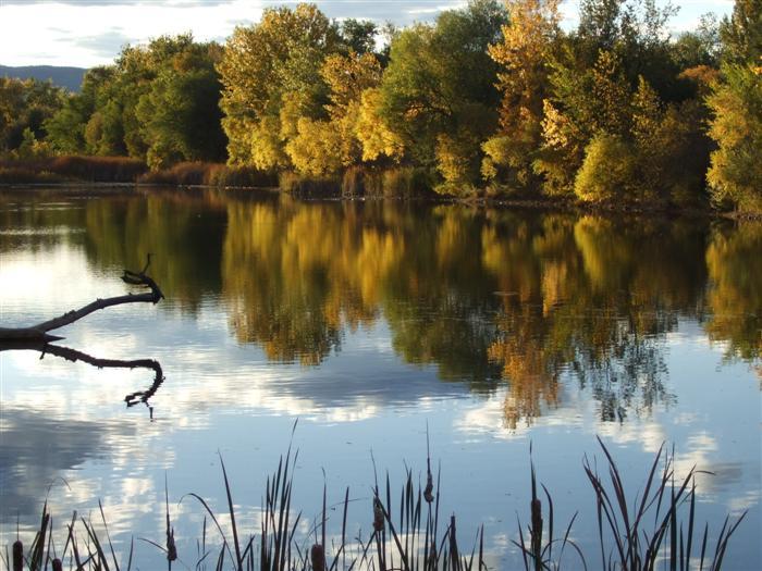 North Shields Pond