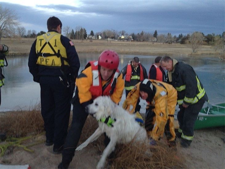 Fort Collins Emergency Responders Rescue Dog