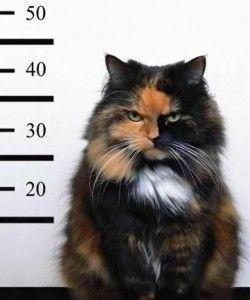 Jailhouse Cats