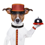 Concierge Pet Sitting Bell Boy