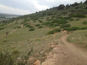 Dog Walking Horsetooth Mountain